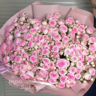 101-kustovaya-rozovaya-roza-60-sm