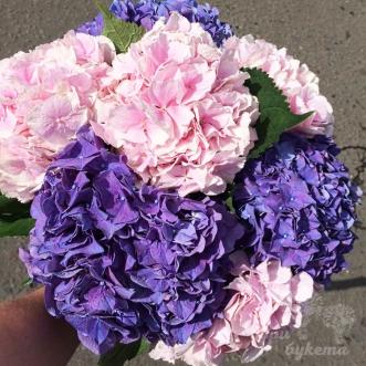 7-rozovyh-i-fioletovyh-gortenzij